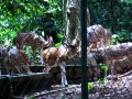 deer park thenmala Eco tourism.jpg